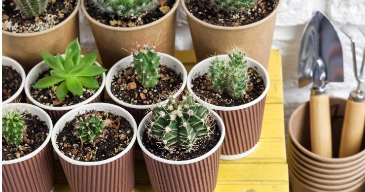 9 DIY Greenhouse Decor Ideas – Summer Tour