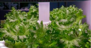 Smart Indoor Garden