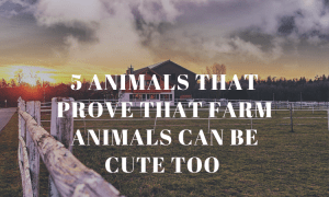 5 Animals That Prove That Farm Animals Can Be Cute Too